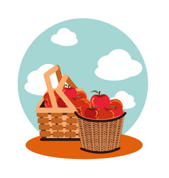 Apples autumn in baskets wicker vector