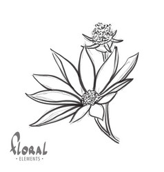flower close-up on a white background vector image