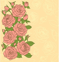 flowers leaves and buds of pink roses vector image