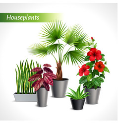 houseplants realistic composition vector image