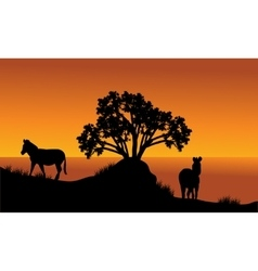 Landscape silhouette of zebra at the morning vector