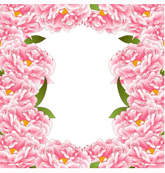 pink peony flower border vector image