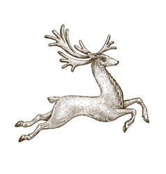 Running deer drawn vintage sketch vector