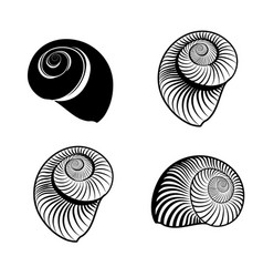 Seashell nautilus engraved signs marine life vector