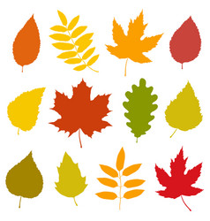 set of isolated colorful autumn leaves silhouettes vector image
