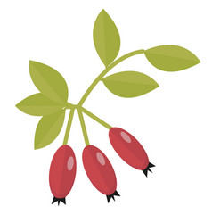 rosehip icon flat or cartoon style hawthorn vector image vector image