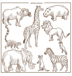 African animals and birds sketch vector