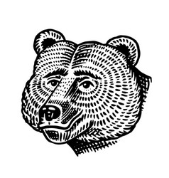 grizzly bear brown wild animal hand drawn vector image