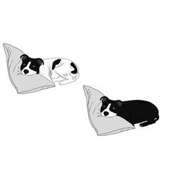 Pitbull dogs cute vector