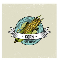 corn vintage set of labels emblems or logo for vector image