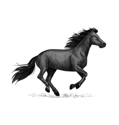 Black horse runs sketch for equine design vector image