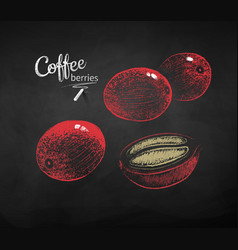 Chalk drawn sketches set coffee berries vector