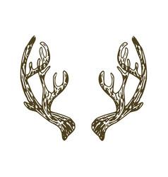 Reindeer antlers vector