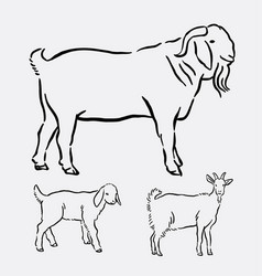 goat pet animal pose hand drawing vector image vector image