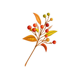 autumn branch with berries vector image