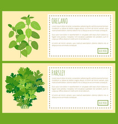 oregano and parsley thick bunches on banners set vector image
