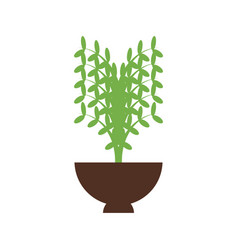 plant in a flowerpot vector image