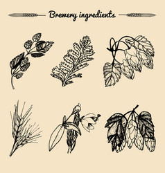 Set of vintage herbs elements of brewery vector