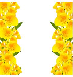 yellow canna lily border vector image