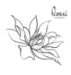 delicate lotus drawn pencil vector image