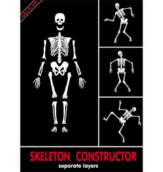 skeleton constructor vector image