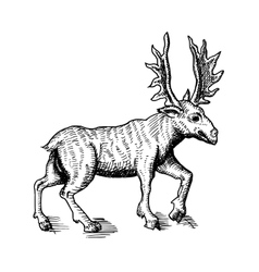 sketch of deer vector image