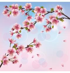 Light background with sakura blossom japanese vector