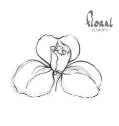 sketch of an exotic flower vector image vector image