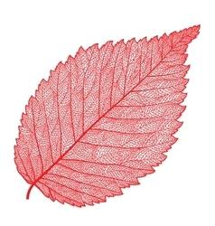 skeletonized leaf vector image vector image