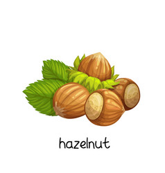 hazelnut in cartoon style vector image