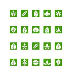 set collection green leaf vector image
