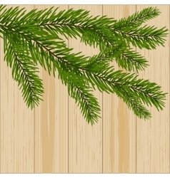Two green spruce branches on the background of vector