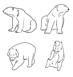 Set of drawings of grizzly bears and white white vector image vector image
