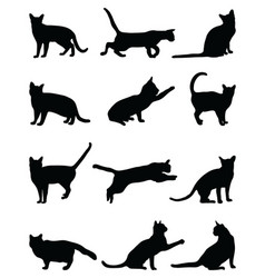 black silhouettes of cats vector image