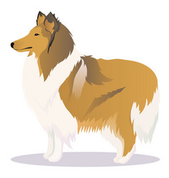 Collie dog vector