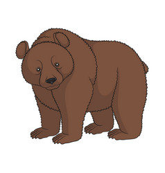 color image of a brown bear isolated object vector image