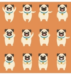 Set of flat pug dog icons vector