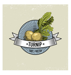 turnip vintage set of labels emblems or logo for vector image