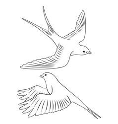 bird swallow vector image
