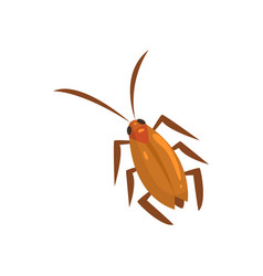Brown cockroach insect cartoon vector