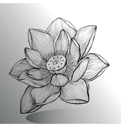 Lotus Flower sketch vector