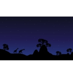Silhouette of giraffe at night vector