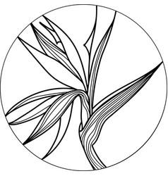 Single bird paradise strelizia tropical flower vector