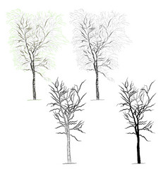 Tree birch vector