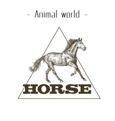 Animal world horse triangle background imag vector