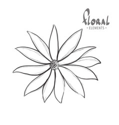 classic flower on a white background vector image