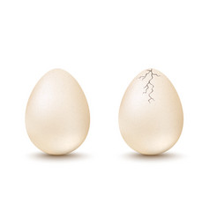 egg and cracked egg vector image