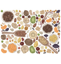 nuts and dried fruits doodle set vector image