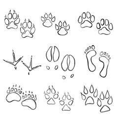 paw prints vector image