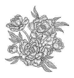 hand drawn spring peony flowers and leaves vector image